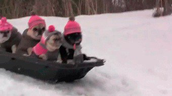 2670748 3223 These bundled up pups are ready for the cold (31 photos)