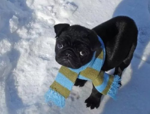 these bundled up pups are read for the cold 17 These bundled up pups are ready for the cold (31 photos)