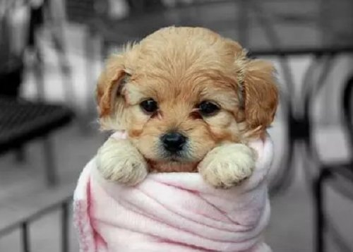 these bundled up pups are read for the cold 18 These bundled up pups are ready for the cold (31 photos)