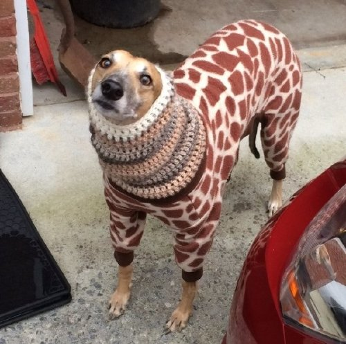 these bundled up pups are read for the cold 22 These bundled up pups are ready for the cold (31 photos)