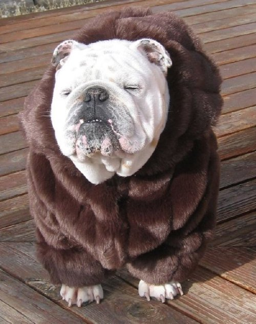 these bundled up pups are read for the cold 254 These bundled up pups are ready for the cold (31 photos)