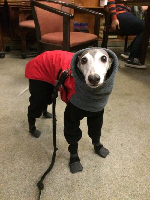 these bundled up pups are read for the cold 23 These bundled up pups are ready for the cold (31 photos)