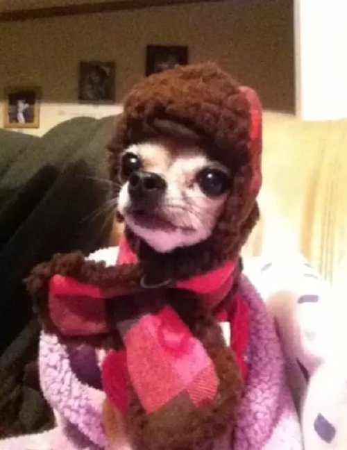these bundled up pups are read for the cold 12 These bundled up pups are ready for the cold (31 photos)
