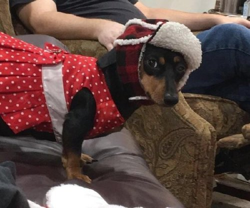 these bundled up pups are read for the cold 7 These bundled up pups are ready for the cold (31 photos)
