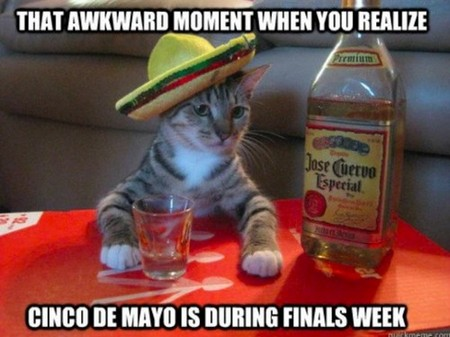 Congrats on surviviving Cinco de Mayo!