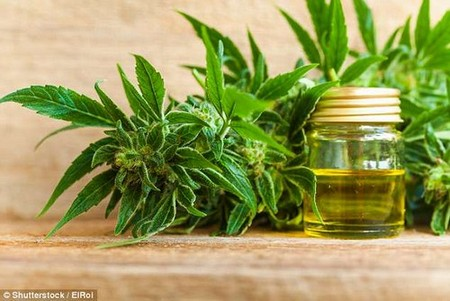 Not just for relaxation: Back to the Future actor Michael J. Fox, who was diagnosed with Parkinson's disease at 29, has said that CBD oil showed him that there is hope, 'even for the hopeless'.