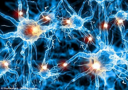 Smart people have bigger brain cells that are better connected than those of less intelligent people, say scientists. As well as being bulkier, the cells also have longer connections at the end of the neurons, meaning they can process more information at a quicker rate (stock)