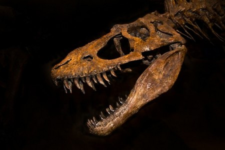 Dinosaur Bones Are the New Hot Item at Auction