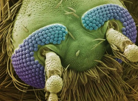 Mind-blowing everyday objects under an electron microscope