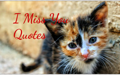 """36 """"I Miss You Like…"""" Quotes"""