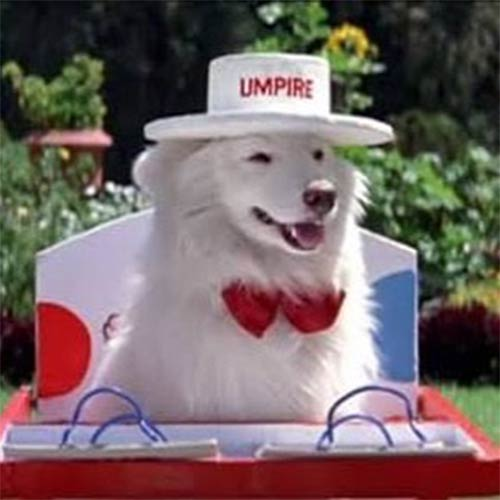 Let's talk about the dog. Is it a dog, or an umpire, or an event planner, or a letter man